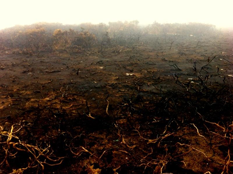 Deprimierend: Die Heide scheint einem Brand zum Opfer gefallen zu sein,