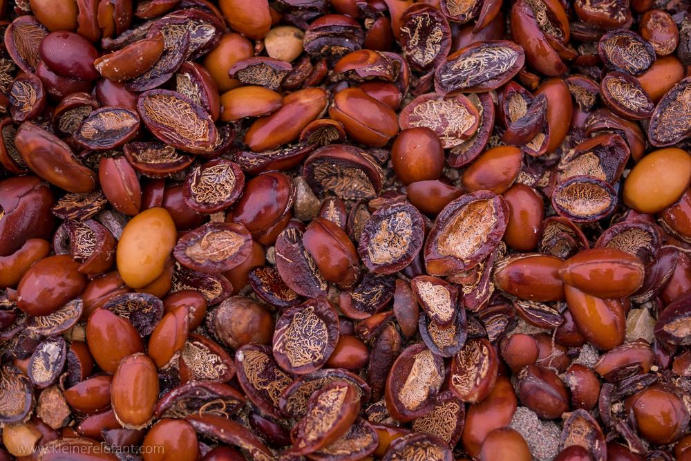 Getrocknete Arganfrüchte in Marokko
