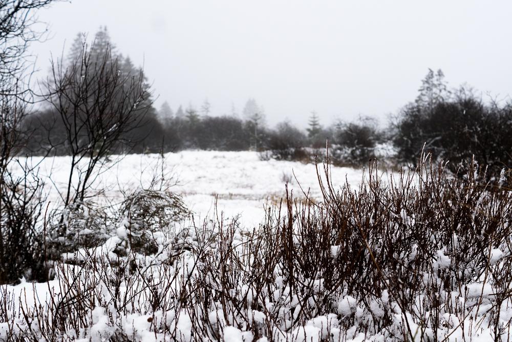 Das Hohe Venn im Winter