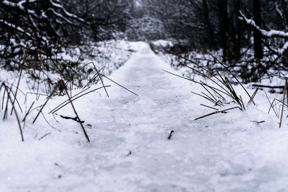 Das Hohe Venn im Schnee