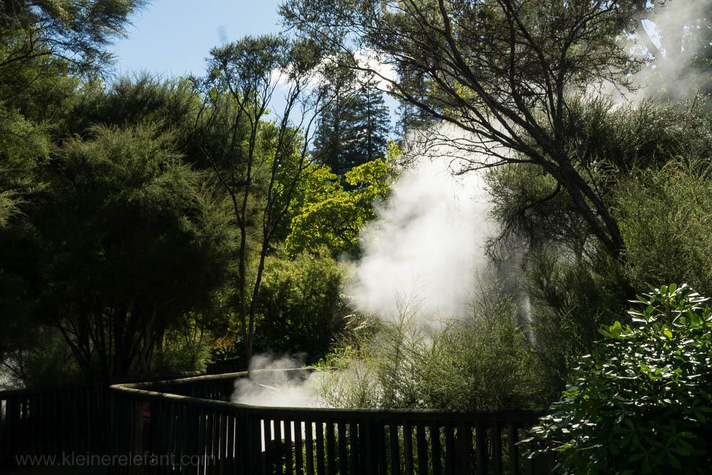 Rororua Kuirau Park