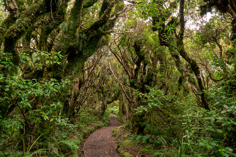 Mount Egmont Nationalpark
