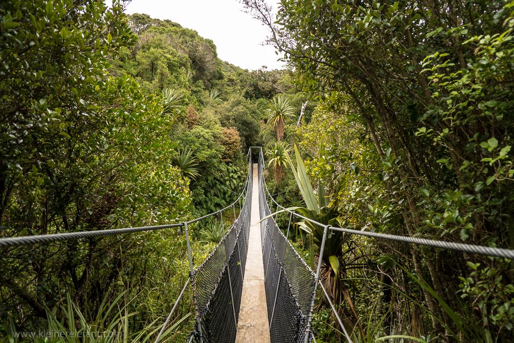 Hängebrücke im Mount Egmont Nationalpark