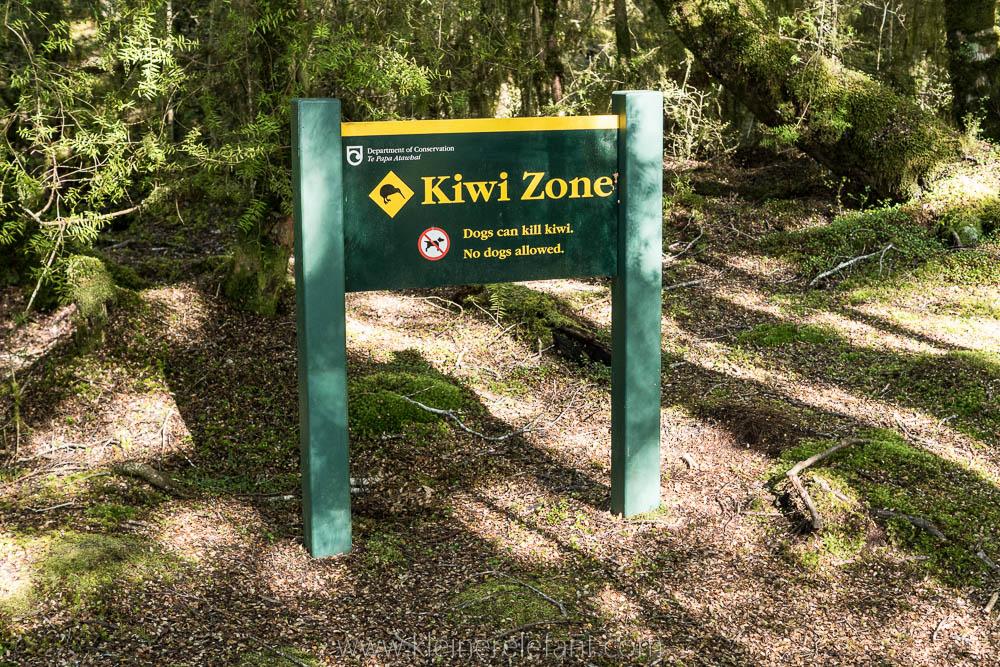 Kiwi Zone Neuseeland Kepler Track