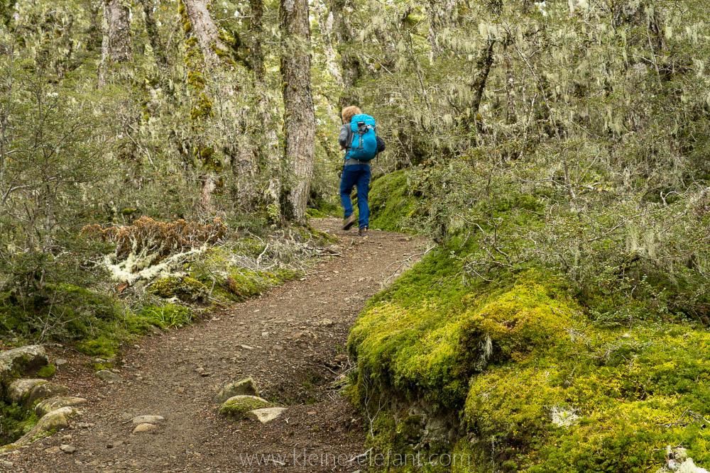 Märchenwald auf dem Kepler Track