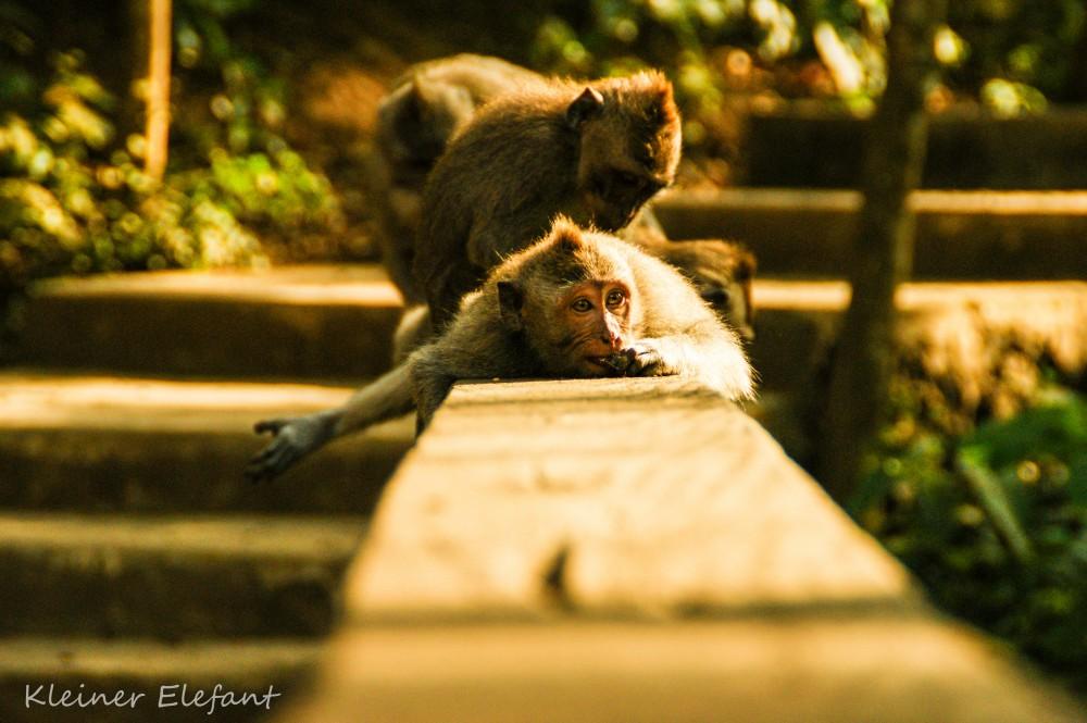 Affen die sich entlausen