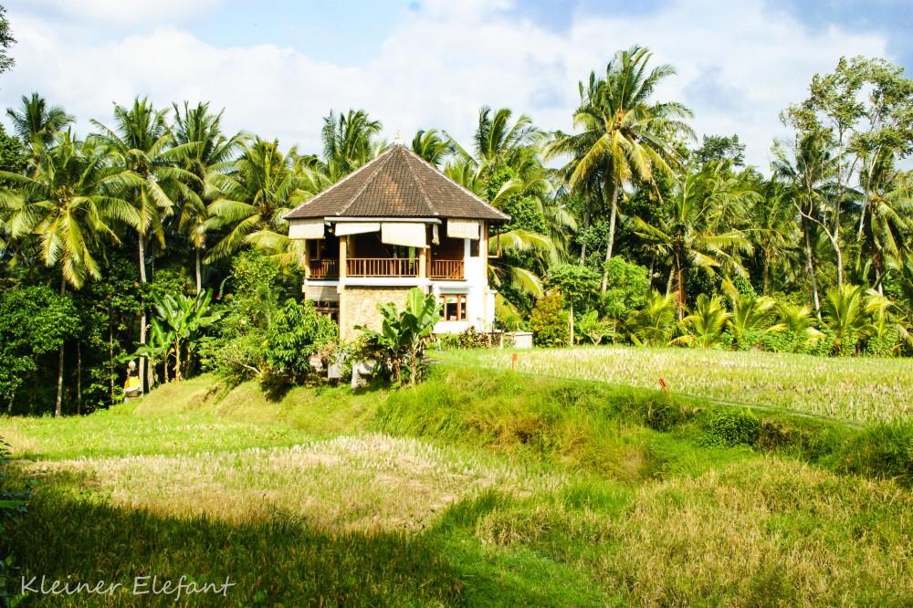 Ubud Yoga House: Eines der schönsten Yogastudios in Ubud