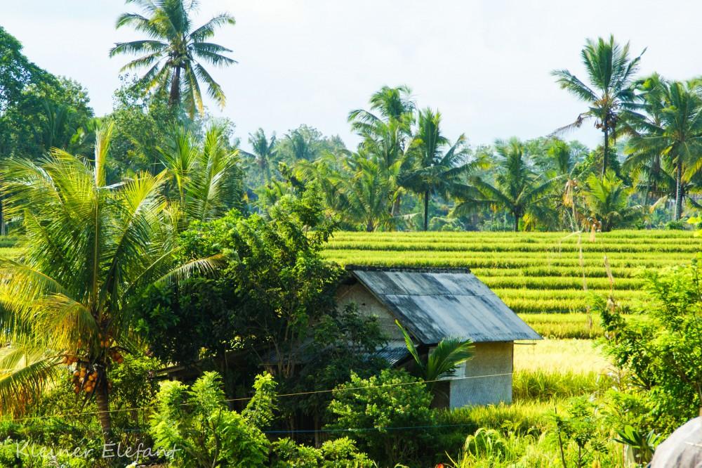 Haus mit Reisfeldern in Ubud