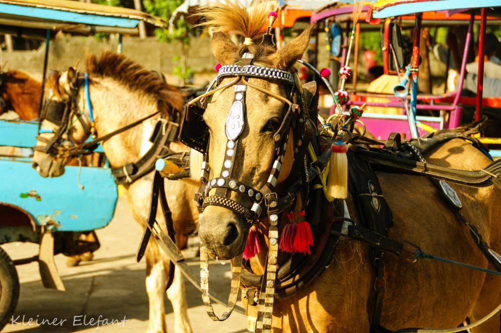 Pferdekutsche Gili Inseln