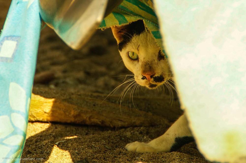 Katze am Strand im Oman