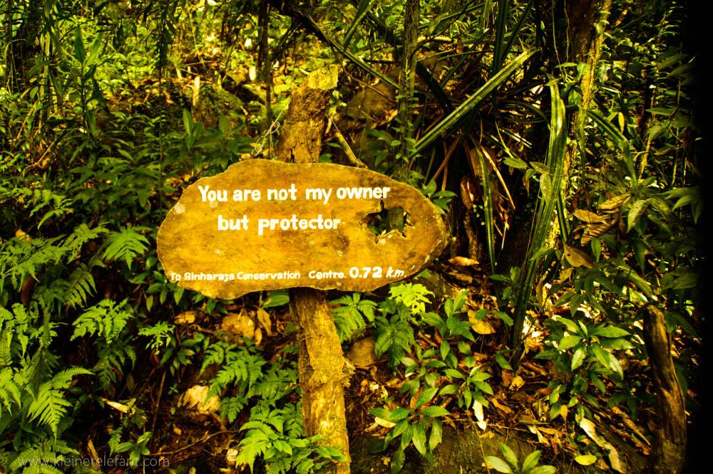 Eine Hinweistafel im Regenwald.