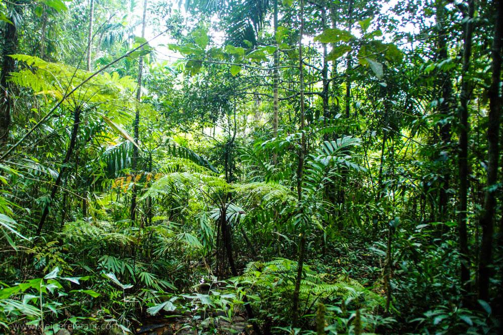 Regenwald Sri Lanka