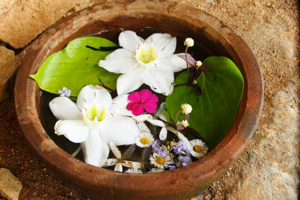 Blumen im Nilambe Meditationszentrum Sri Lanka
