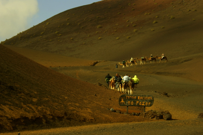 Für 12 Euro pro Dromedar kann man sich zu zweit 45 Minuten lang durch den Nationalpark schaukeln lassen.