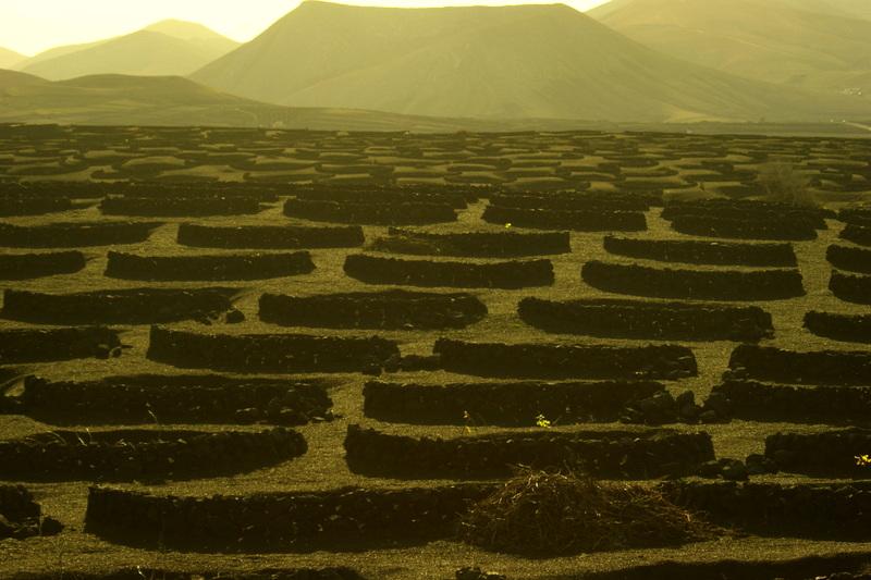 Felder wie diese sieht man auf Lanzarote überall.