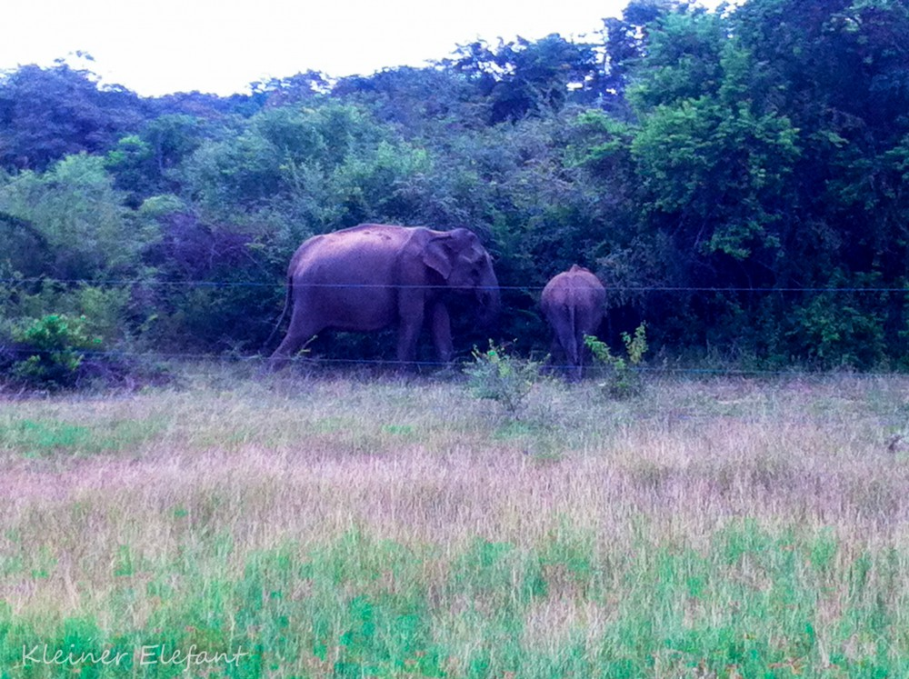 Elefanten Peanut Farm