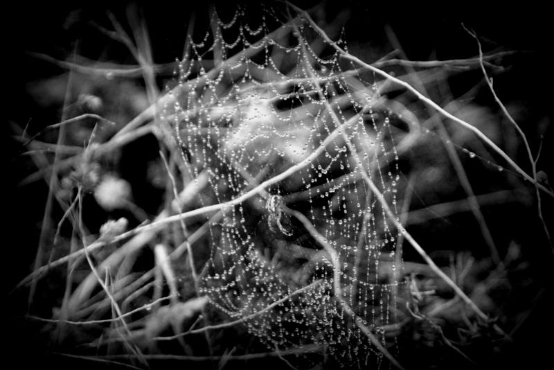Dicke Spinnen warten auf ein ahnungsloses Opfer, das sich in dieses lebensfeindliche Gelände verirrt.