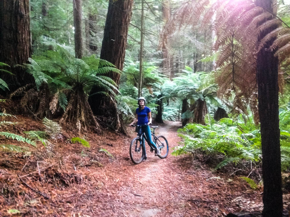 Montainbiker im Red Woods Forest
